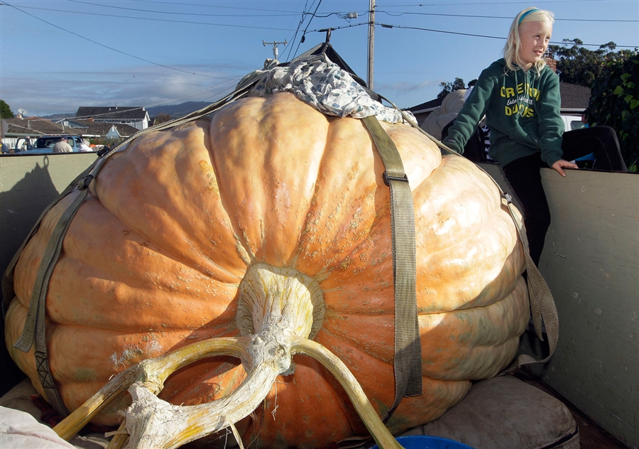 Half Moon Bay Pumpkin Festival winner (2012).