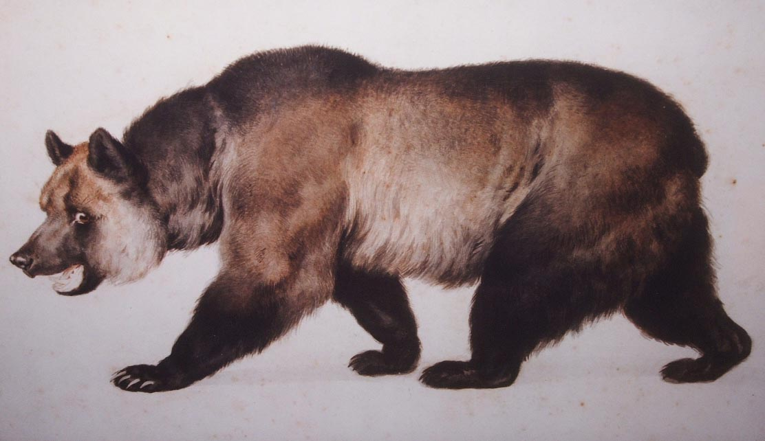 Grizzly bear by Charles Nahl (1818-1878).